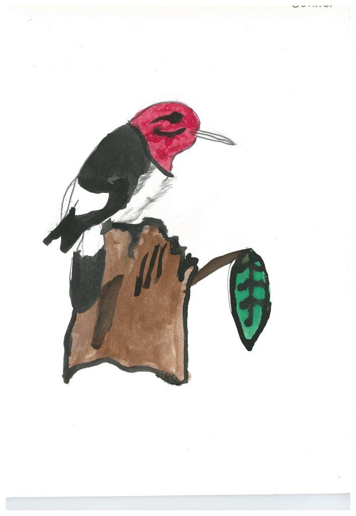 red bird00000001